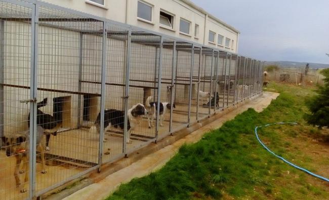 Kατασκευή του δεύτερου καταφυγίου αδέσποτων ζώων συντροφιάς στο Δήμο Αρταίων.