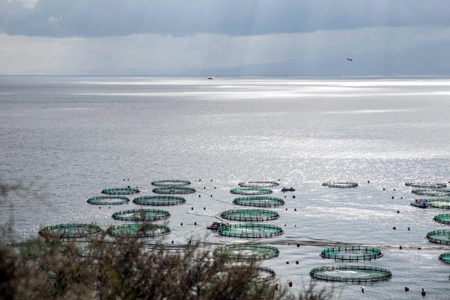 2η Ανοικτή Ημέρα Υδατοκαλλιέργειας με την υποστήριξη της ΕΛΟΠΥ