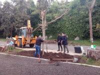 Φυτεύονται νέα δέντρα στην παραλίμνιο προς αντικατάσταση των πλατάνων