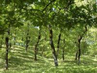 Μήνυμα του Δημάρχου Ι.Π. Μεσολογγίου Κώστα Λύρου για την Παγκόσμια Ημέρα Περιβάλλοντος