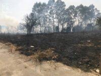 Υπό μερικό έλεγχο η πυρκαγιά στον Προφήτη Ηλία – Στάχτη 20 στρέμματα
