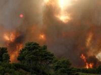 Ευ. Λέκκας: «Ξεχάστε την αναδάσωση σε 300.000 στρ. δάσους που έχουν καεί»