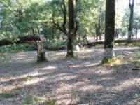 Τέλος στον «Γολγοθά» της κοπής ή κλάδευσης δέντρων από κήπους και αυλές