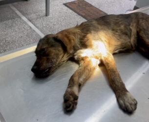 Αμφιλοχία: Διερχόμενος οδηγός φροντίζει αδέσποτο σκύλο μετά από τροχαίο