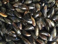 Απαγορεύεται η αλιεία και διακίνηση μυδιών από τη ζώνη παραγωγής δίθυρων – μαλακίων  Μάζωμα