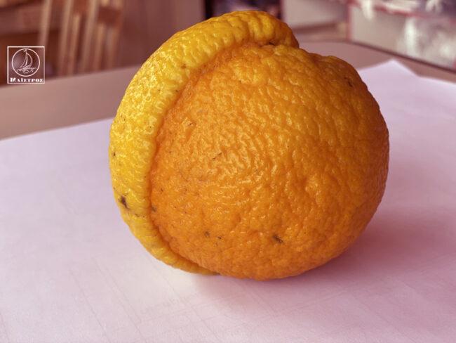 Λεμόνι από πορτοκάλι – Τα περίεργα της φύσης